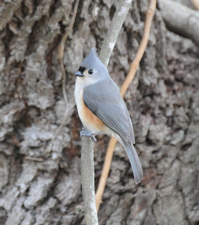 Audubon South Carolina: Great Backyard Bird Count - Feb. 17th