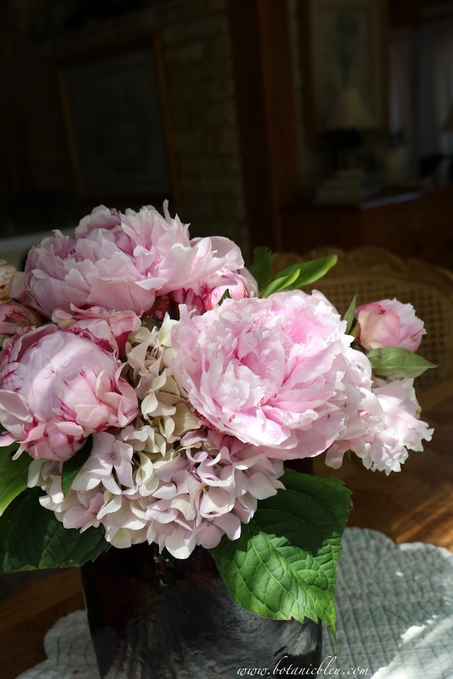 Under the spell of peonies my family mispronounced peony for generations