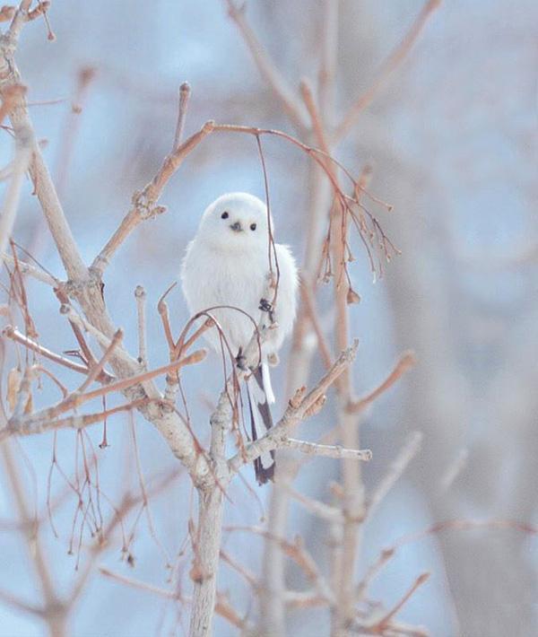 """7 loài động vật dễ thương vô cùng tại """"đảo thiên đường"""" Hokkaido"""