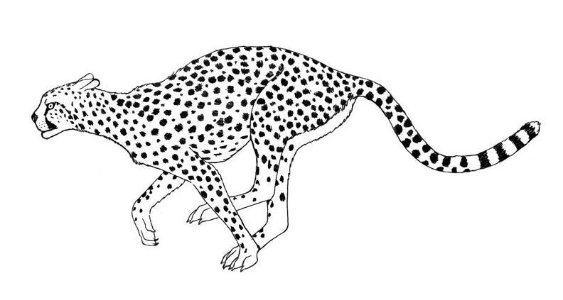 Dibujo Leopardo Para Colorear E Imprimir: Blog MegaDiverso: Leopardo Para Descargar Y Pintar