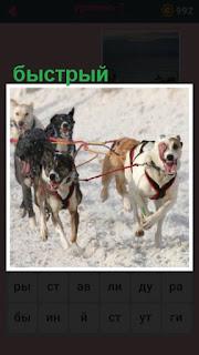 651 слов в упряжке быстрые собаки зимой 7 уровень