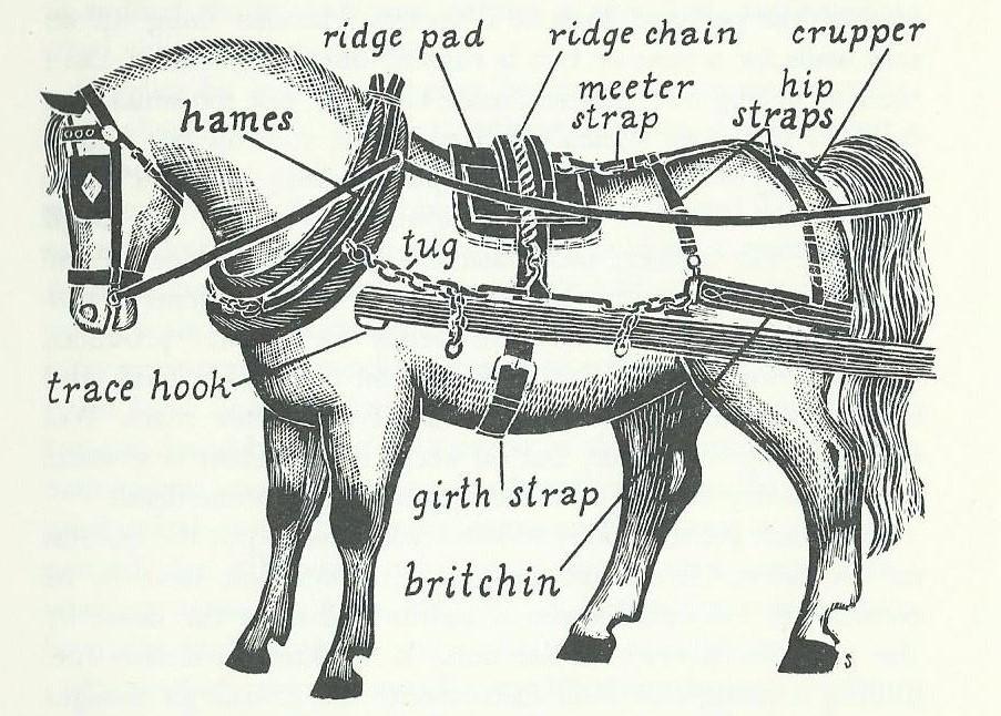 draft horse gear diagram