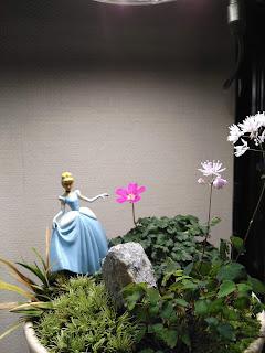 姫フウロ草とツクシカラマツの庭