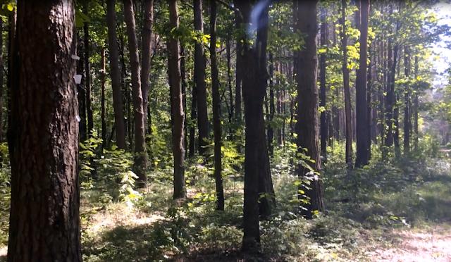 База отдыха, гуляем по лесу