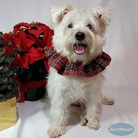 Countdown to Christmas, Week 3 - Handmade Gift Ideas