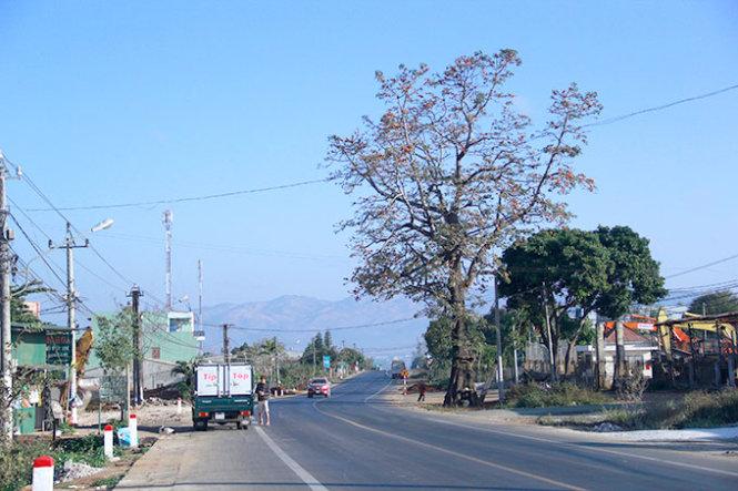 Gia Lai: Uốn đường quốc lộ để giữ cây gạo cổ thụ theo ý người dân