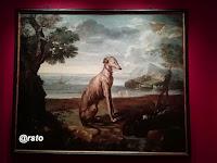 Cani in posa a Venaria