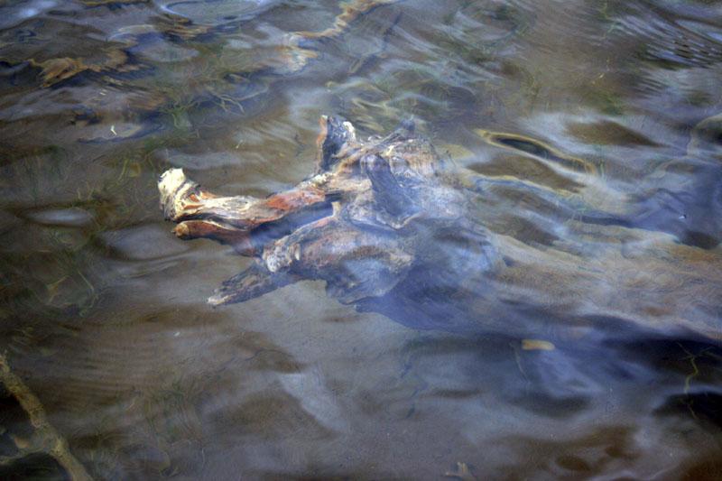 озеро рыбное на камчатке
