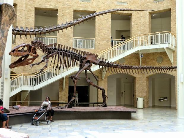 Georgia Fernbank Museum of Natural History