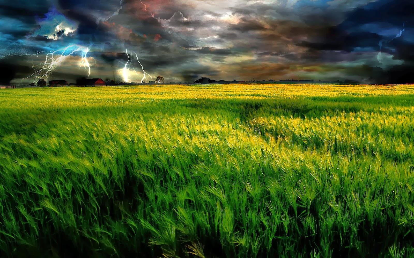 Grass Field Wallpapers ~ HD Wallpapers