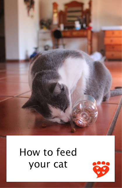 How to feed your cat: Multiple small meals a day with food toys, different locations, and separated resources