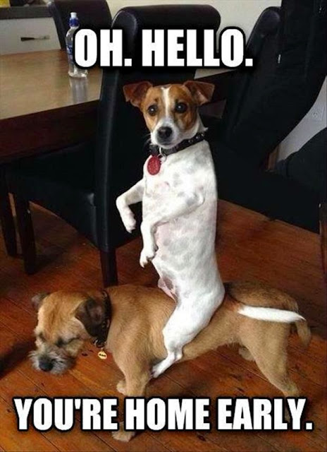 Funny Hello You're Home Early Dog Joke Picture