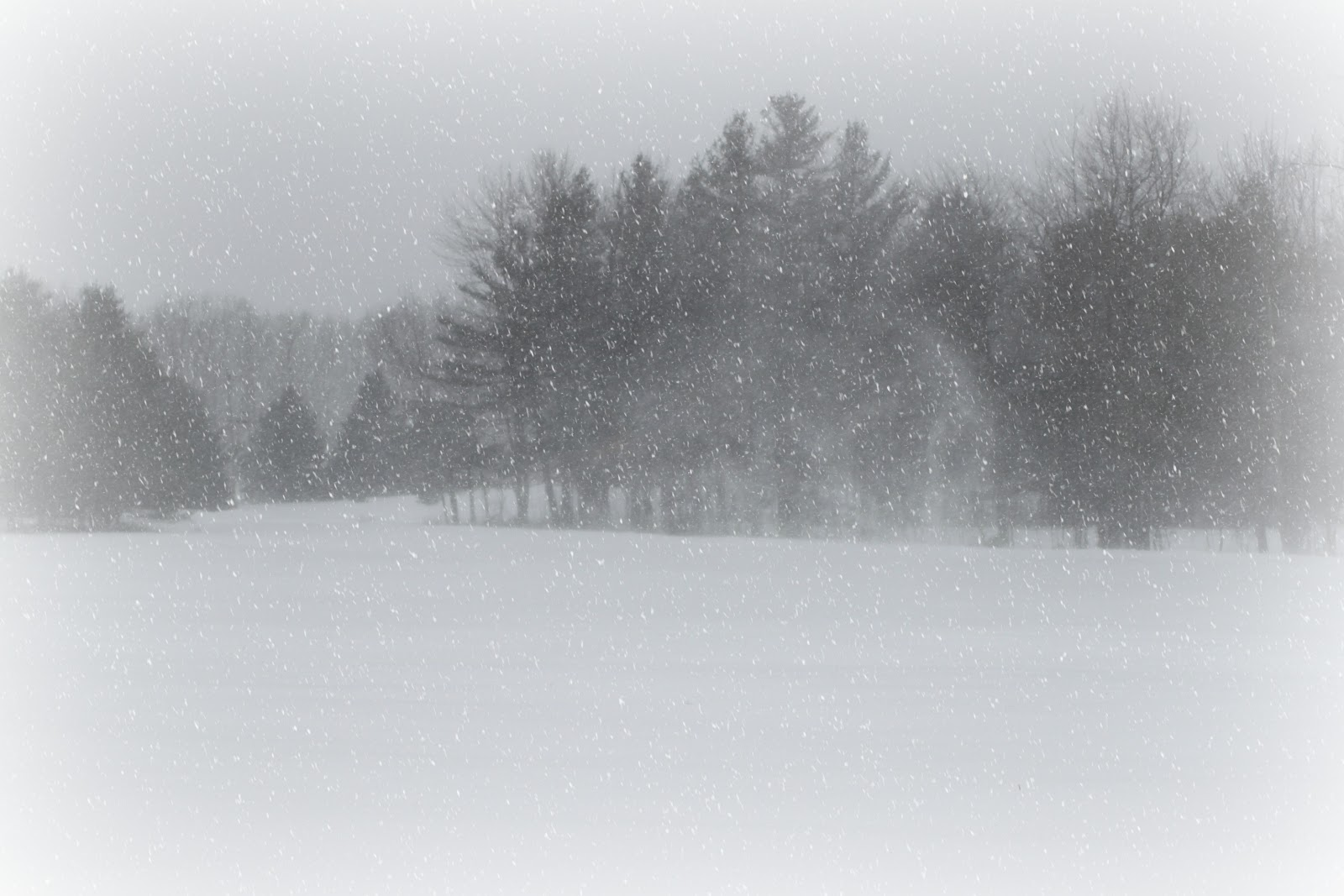 Dog Trot Farm 35 5 Inches Of Snow