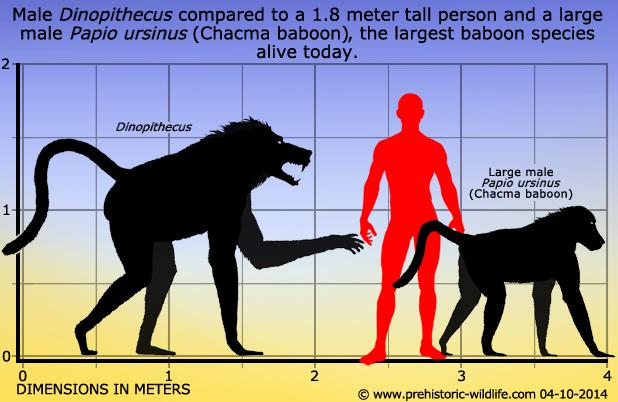 Long Legged Dog Like Mammal Of Africa