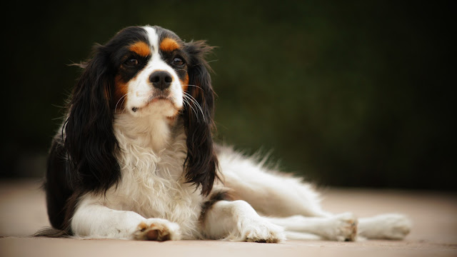 10 Popular Dog Breeds Prone to Serious Health Issues