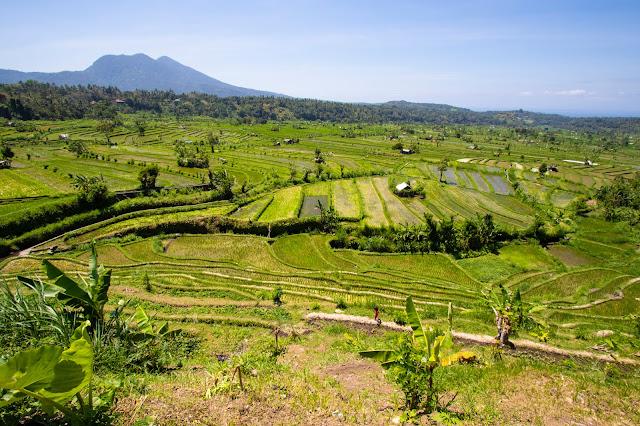 Risaie Tirta Gangga-Bali