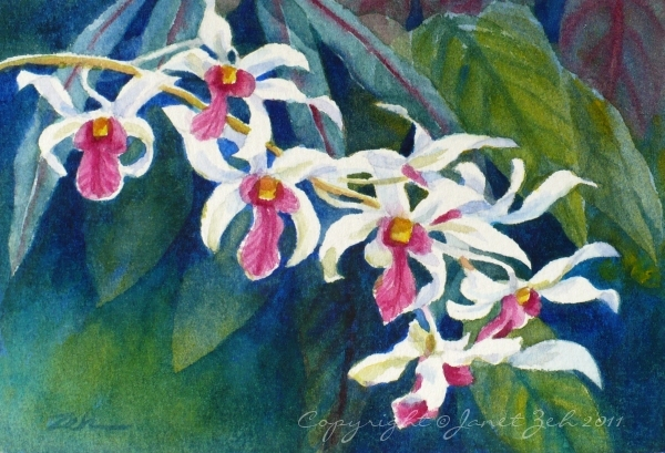 Zeh Original Art Blog Watercolor And Oil Paintings Orchid Spray