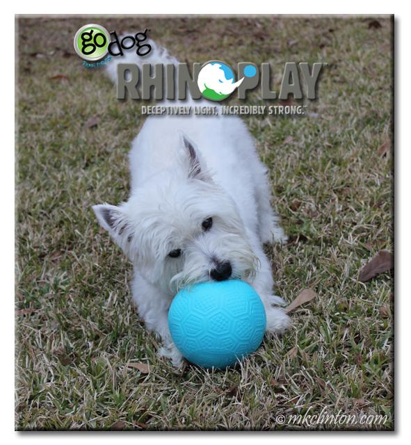 Westie biting ball