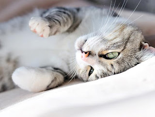 Cat Kidney Disease