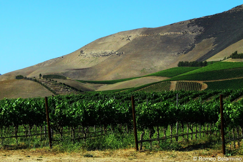 Santa Maria Valley Vineyard California Weekend Getaways Ideas
