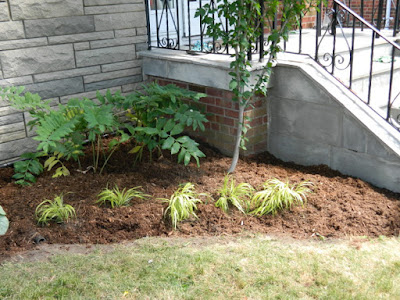 Scarborough Dorset Park front yard garden makeover after by Paul Jung Gardening Services Toronto