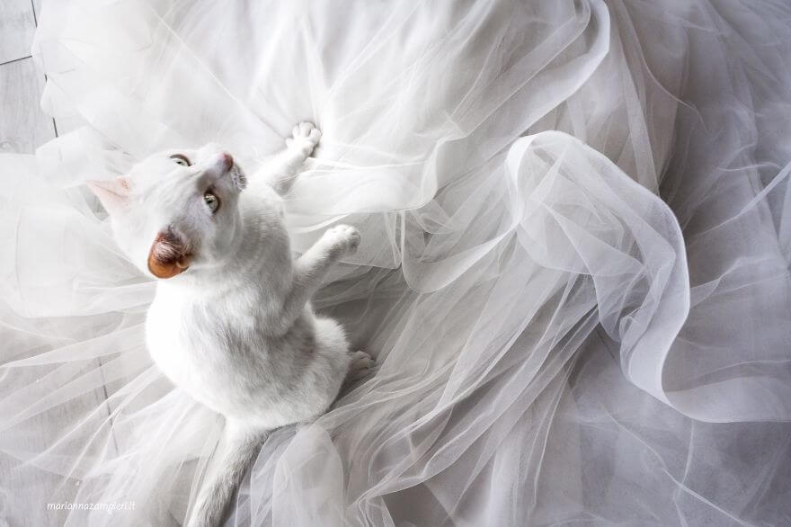 This Photographer Does Post-Wedding Private Shooting With Cats, And Here's The Result