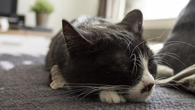 5 Tips Agar Kucing Tidak Tidur Sembarangan di Rumah