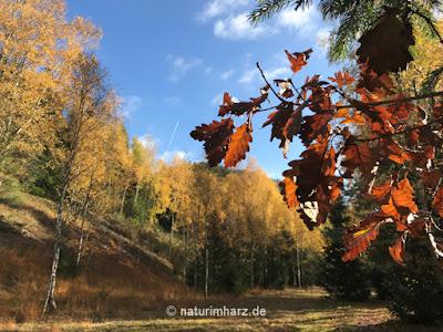 Herrliche Farbenpracht im Herbst an der Innerste am geologischen Lehrpfad