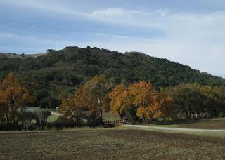 Fall colors in a row of trees at a farm, near Morgan Hill, California