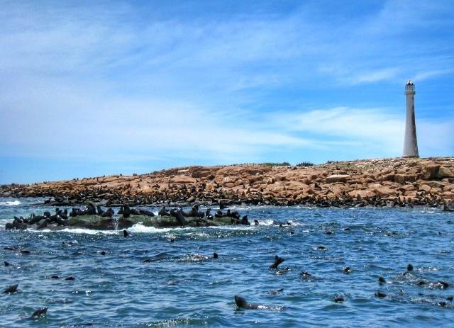 Lobos marinos en Punta del Este - Isla de Lobos