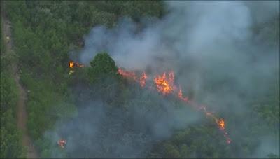 Fogo consumiu mata nativa e eucaliptos, segundo informações do Portal Terra. Imagem: frame de vídeo da Globo
