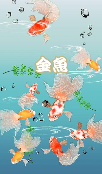 The world of goldfish
