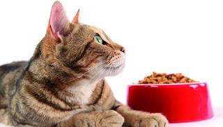 L'aumento della fame nel gatto