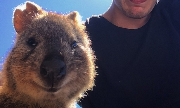 Happiest Animal In The World Selfie