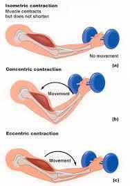 Pengertian Kontraksi Otot Isometrik