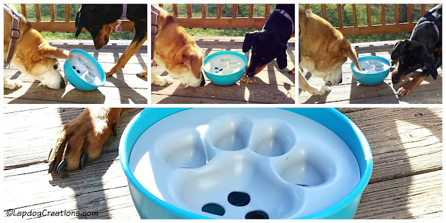 The #PAW5 Rock 'N Bowl makes mealtime fun and lets your dog play with her food! #dogbowl #rescueddogs #LapdogCreations ©LapdogCreations #sponsored