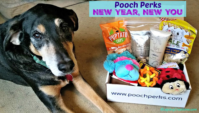 senior rescue dog with Pooch Perks subscription box