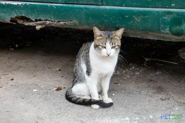 abandoned car cat
