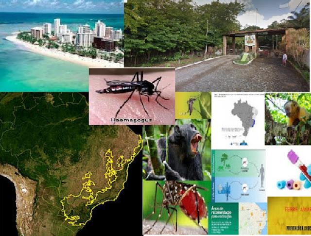 Onde a Febre Amarela se esconde em Alagoas ?