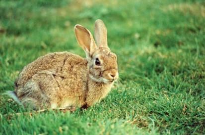 20 Fakta Menarik Tentang Kelinci