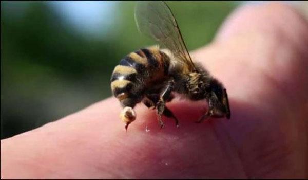 Bagaimana Cara Mengobati Sengatan Lebah Secara Alami
