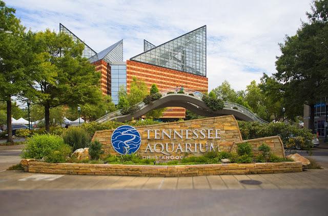 Best Aquariums in the USA: Tennessee Aquariums