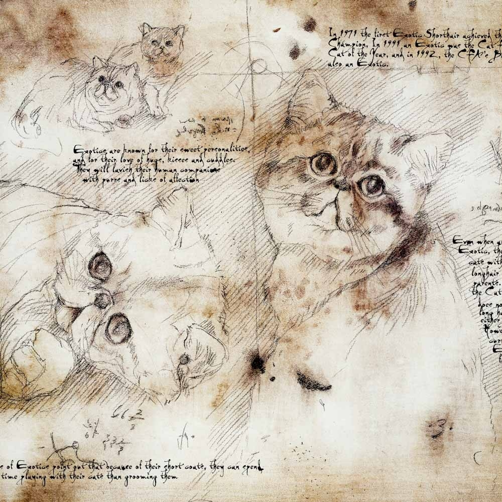 12-Exotic-Shorthair-Study-Leonardo-s-Dogs-Cats-and-Dogs-Drawn-in-the-style-of-Leonardo-da-Vinci