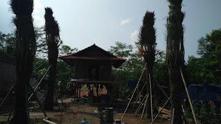 Kampung Kurma Tanjungsari, Kampoeng Kurma Tanjungsari, alamat kampung kurma, info kampung kurma,