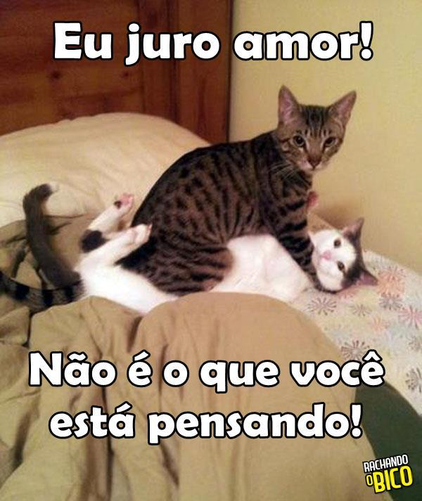 Frases E Fotos De Humor Para Compartilhar No Facebook Archidev