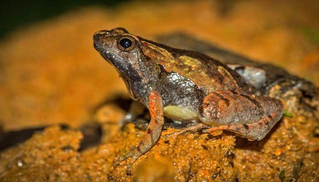 10 Spesies Baru Di Tahun 2016