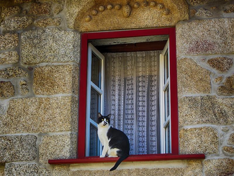 Gato numa janela de Castelo Novo