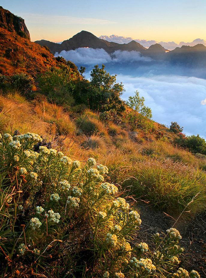 Afternoon Plawangan Sembalun an altitude 2639 meters - Mount Rinjani