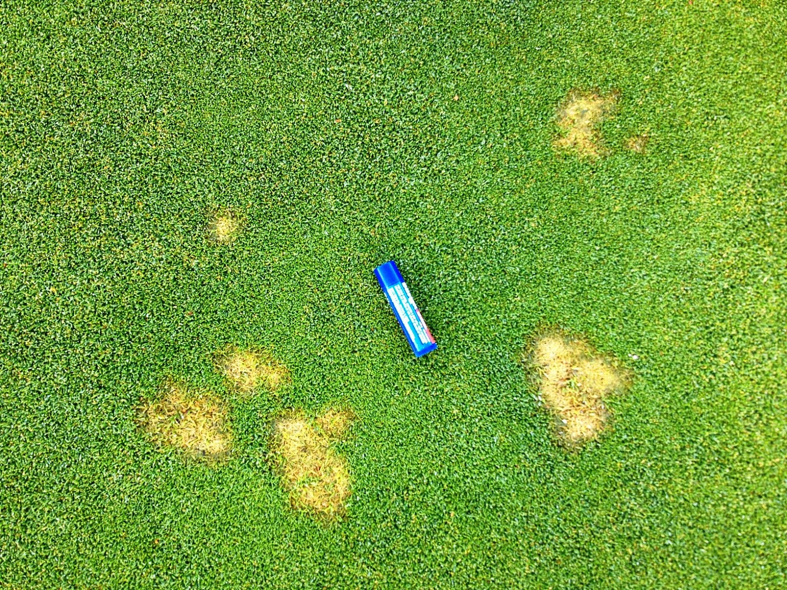 Quilchena Golf Club Turf Care: What's up with the patches ...
