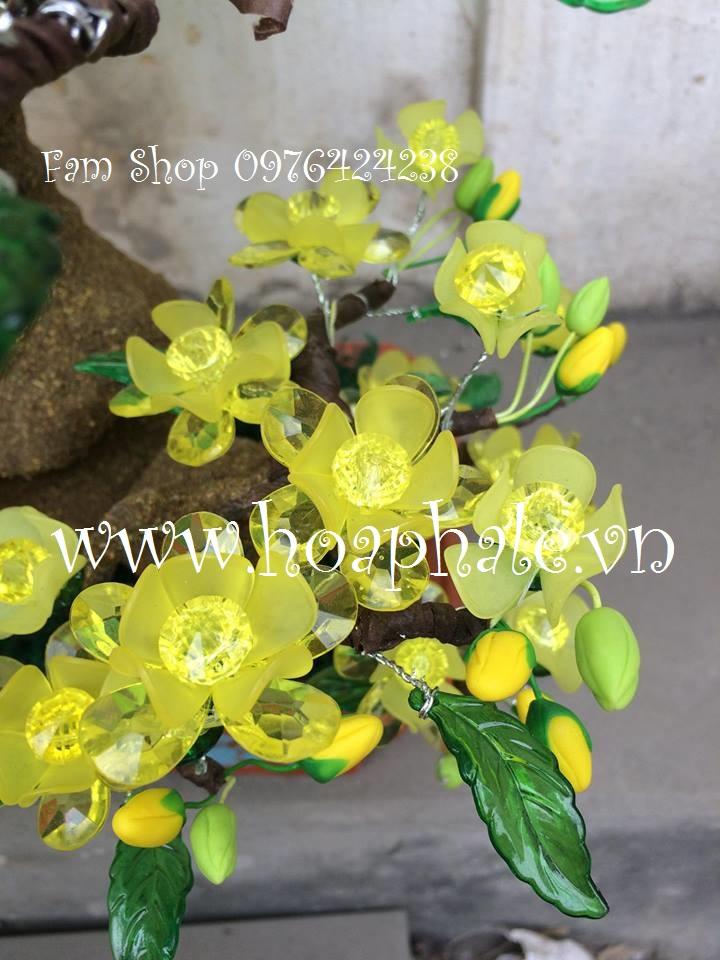 Hoa mai lam goc bonsai o Tay Ket
